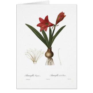 Amaryllis reginae card