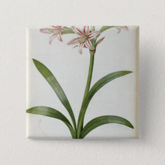 Amaryllis Vittata 15 Cm Square Badge
