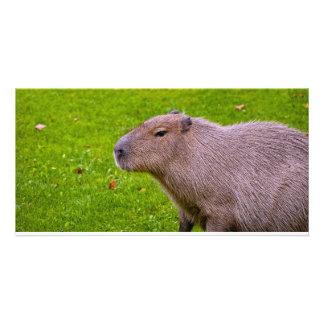 Amazing Animal Capybara Customized Photo Card