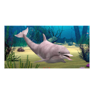 Amazing Animal Dolphin Custom Photo Card