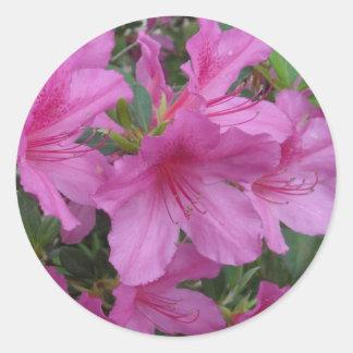 Amazing Azaleas Classic Round Sticker