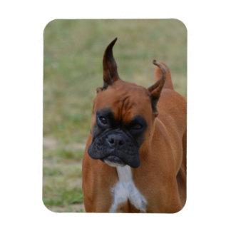 Amazing Boxer Dog Rectangular Photo Magnet