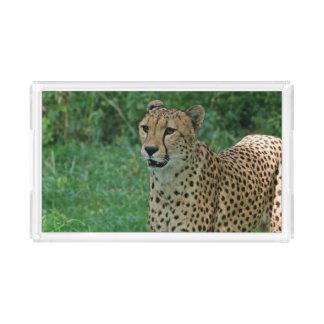 Amazing cheetah acrylic tray