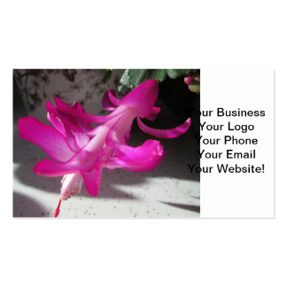 Amazing Christmas Cactus Pack Of Standard Business Cards