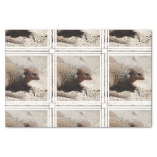 Amazing Dwarf Mongoose Tissue Paper