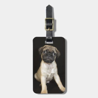 Amazing Little Pug Puppy Luggage Tag