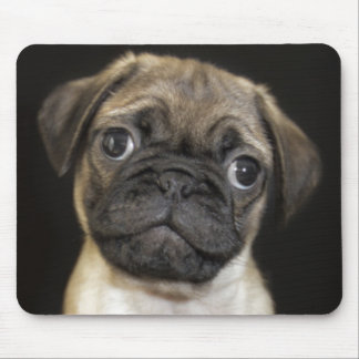 Amazing Little Pug Puppy Mouse Pad
