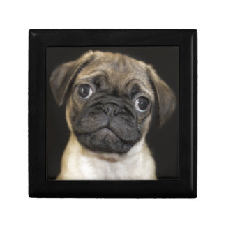Amazing Little Pug Puppy Small Square Gift Box