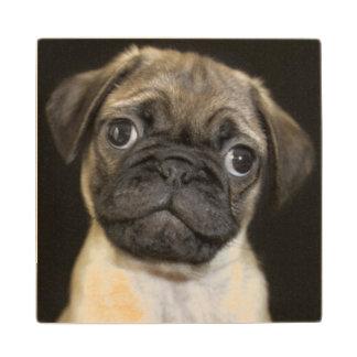 Amazing Little Pug Puppy Wood Coaster