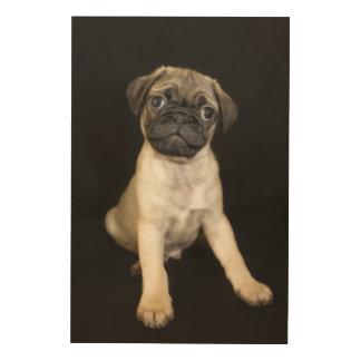 Amazing Little Pug Puppy Wood Print