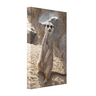 Amazing Meerkat Canvas Print