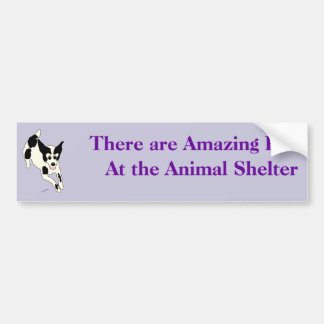 Amazing Pets Bumper Sticker 17