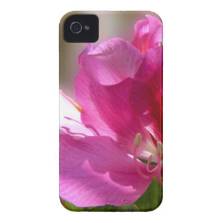 Amazing pink tropical tree flower iPhone 4 Case-Mate case
