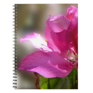 Amazing pink tropical tree flower notebooks