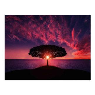 Amazing Sunset Postcard