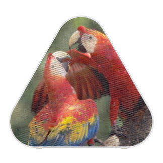 Amazon, Brazil. Pair of Scarlet Macaws (Ara