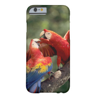 Amazon, Brazil. Pair of Scarlet Macaws (Ara Barely There iPhone 6 Case