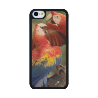 Amazon Brazil Pair of Scarlet Macaws Ara Carved® Maple iPhone 5C Slim Case