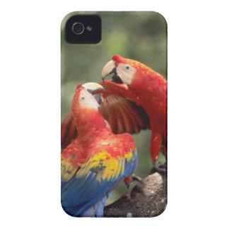 Amazon, Brazil. Pair of Scarlet Macaws (Ara Case-Mate iPhone 4 Case