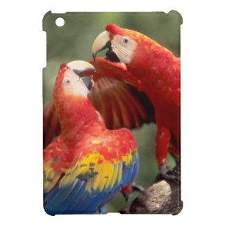 Amazon, Brazil. Pair of Scarlet Macaws (Ara iPad Mini Case