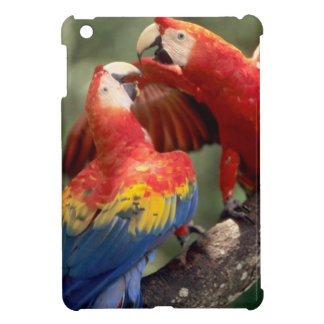 Amazon, Brazil. Pair of Scarlet Macaws (Ara iPad Mini Cover