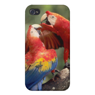Amazon, Brazil. Pair of Scarlet Macaws (Ara iPhone 4/4S Covers