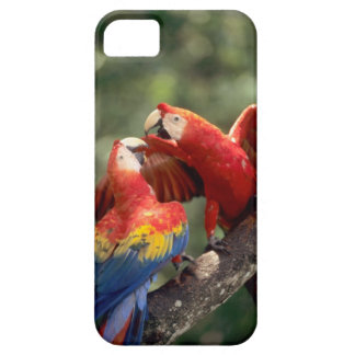 Amazon, Brazil. Pair of Scarlet Macaws (Ara iPhone 5 Cover