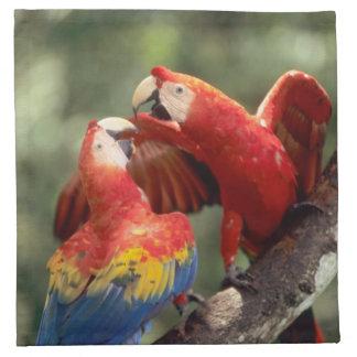 Amazon, Brazil. Pair of Scarlet Macaws (Ara Napkin