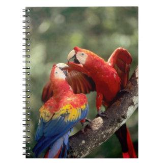 Amazon, Brazil. Pair of Scarlet Macaws (Ara Notebook