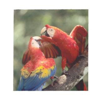 Amazon, Brazil. Pair of Scarlet Macaws (Ara Notepad
