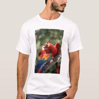 Amazon, Brazil. Pair of Scarlet Macaws (Ara T-Shirt