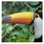 Amazon, Brazil. Yellow-beaked toucan with white Tile