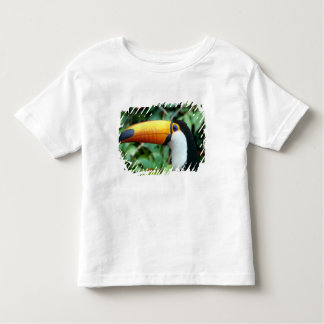 Amazon, Brazil. Yellow-beaked toucan with white Toddler T-Shirt