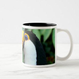 Amazon, Brazil. Yellow-beaked toucan with white Two-Tone Coffee Mug