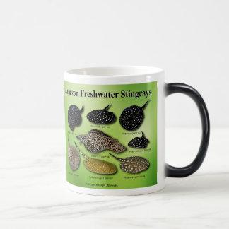 Amazon Freshwater Stingrays Morphing Mug
