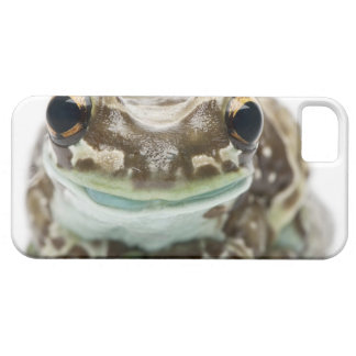 Amazon Milk Frog - Trachycephalus resinifictrix Barely There iPhone 5 Case