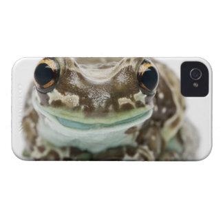 Amazon Milk Frog - Trachycephalus Resinifictrix Case-Mate iPhone 4 Case