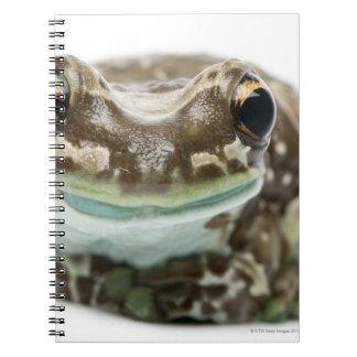 Amazon Milk Frog - Trachycephalus resinifictrix Note Books