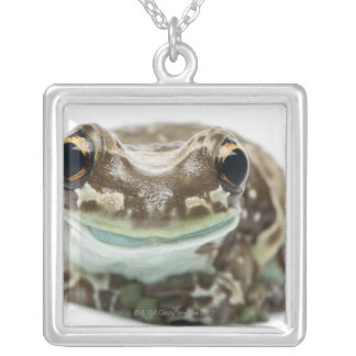 Amazon Milk Frog - Trachycephalus Resinifictrix Silver Plated Necklace