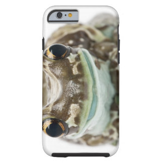 Amazon Milk Frog - Trachycephalus resinifictrix Tough iPhone 6 Case