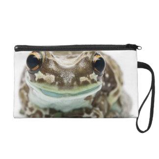 Amazon Milk Frog - Trachycephalus Resinifictrix Wristlet