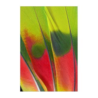 Amazon Parrot Feather Design Acrylic Print