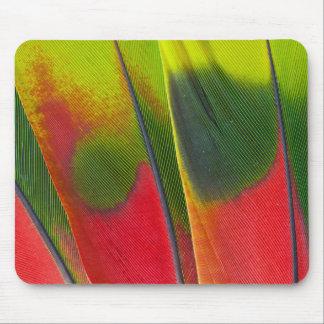 Amazon Parrot Feather Design Mouse Mat