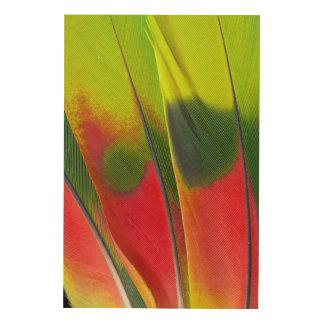 Amazon Parrot Feather Design Wood Print