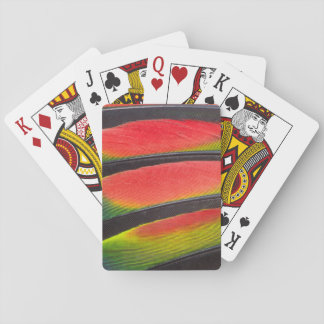 Amazon parrot feathers playing cards