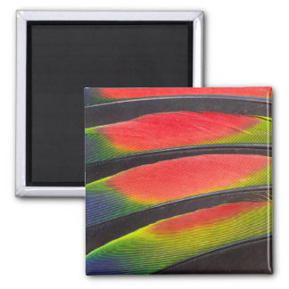 Amazon parrot feathers square magnet