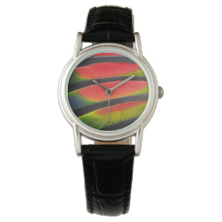 Amazon parrot feathers wristwatches