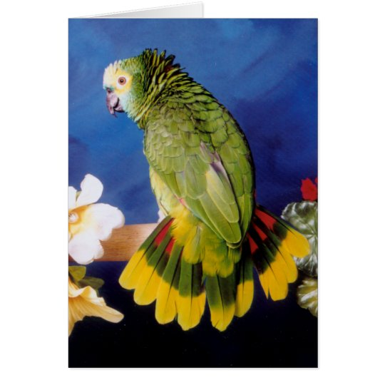 Amazon Parrot Greeting Card