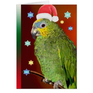 Amazon Parrot Santa Claus Card