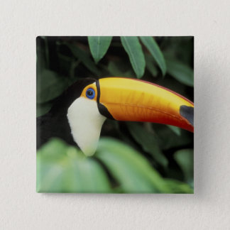 Amazon Rain Forest. 15 Cm Square Badge